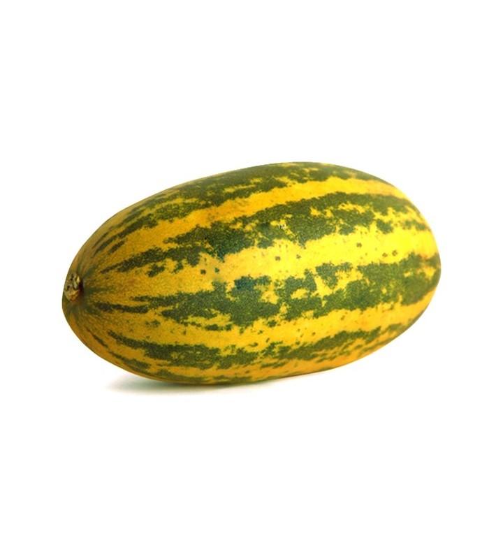 Cucumber Samber - แตงลายเสือ