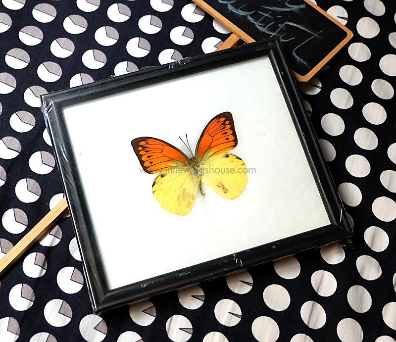 ++ ผีเสื้อสต๊าฟ กรอบรูปผีเสื้อ Great Orange Tip สีส้มเหลือง ++