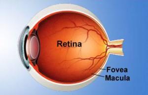 ลูติน่า,ลูทีน,อาหารเสริมสายตาลูติน่า,สายตา,ดวงตา,วิตามินสายตา,บำรุงสายตา,ฟื้นฟูดวงตา,ต้อหิน,ต้อกระจก,ตาแห้ง,แพ้แสง,แสบตา,วุ้นในตา,ตามัว,ปัญหาสายตา