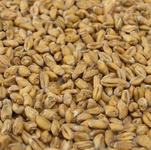Weyermann- Wheat Malt (Pale)