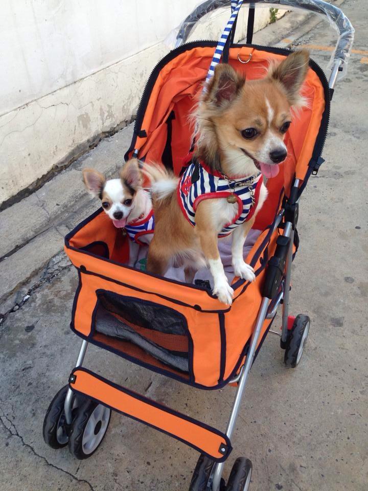 รถเข็นสุนัข คันเล็ก รุ่น F สีส้ม