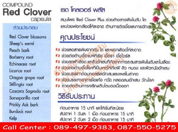 red clover ราคา